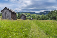 Wooden barns on a blooming meadow