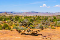 Arches National Park in summer panorama with blue sky