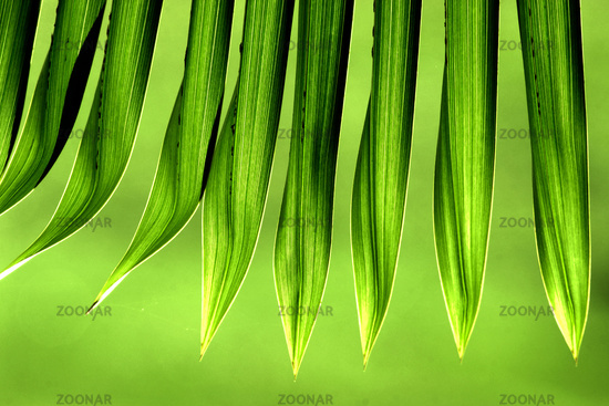 Tips of palm leaves