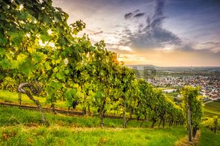 Sonnenuntergang am Weinberg mit Reben