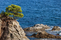 Lone Tree on a Cliff at Mediterranean Sea