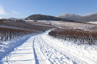 Verschneite Weinberge in der Südpfalz