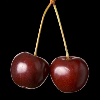 Two cherries hanging isolated