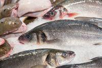 Fresh caught fish at the Rialto fish market - Venice