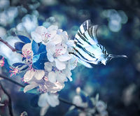 Beautiful sakura flower cherry blossom and butterfly fluttering over close-up. Greeting card background template. Shallow depth. Soft dark blue toned. Spring magic nature