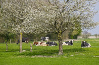 Frühling im Münstermann