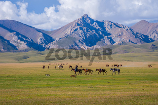 Man guiding horses, Song Kul lake