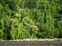 Grass betwen asphalt and forest
