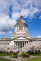 Washington State Capital Building Olympia Springtime Cherry Blossoms