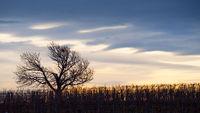Sonnenuntergang über den Weingärten bei Eisenstadt