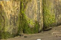 Nahaufnahme von Buhnen am Sandstrand mit grünen Algen bewachsen