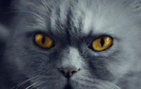 gray cat background