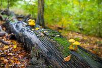 Pilze im Herbst