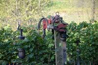 Arbeit in einem Weinberg