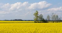 Beautiful spring rural landscape