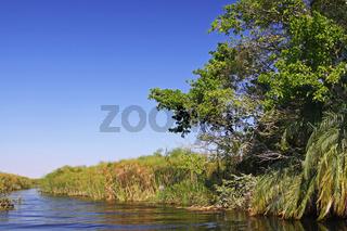 Im Okavango-Delta Botswana