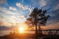 Pine tree and beautiful sunset