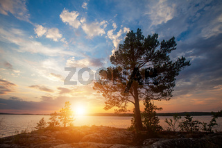 Pine tree and beautiful sunset