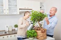 Senioren gärtnern in der Küche
