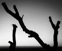 toter Baum in der Wüste, Namibia