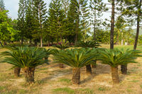 Beautiful tropical palm trees in park