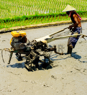 Man worker Rice field. Indonesia