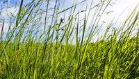 Grüne Wiese im Sommer