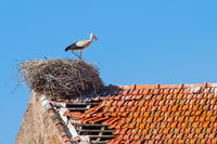 Adult stork standing in nest on  building