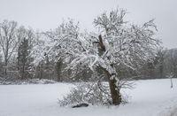 Winter bei Sittenhardt, Deutschland