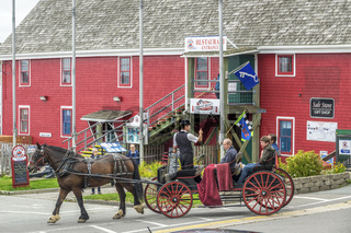 Horse and Carriage, Lunenburg, Nova Scotia, Canada