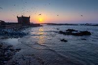 Essaouira fort at sunset with seagulls