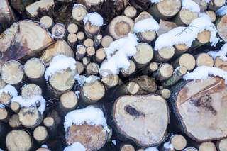 cutted wood in the forest
