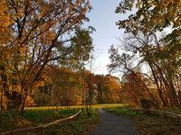 Herbstlicher Park im Norden von Berlin im Abendlicht