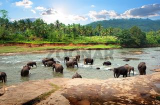Elephants in park