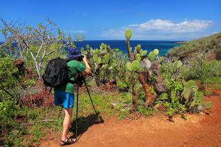 Man photographing Galapagos prickly pear on Rabida Island in Galapagos National Park, Ecuador