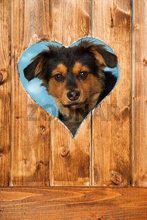 Hund sieht durch ein Herz