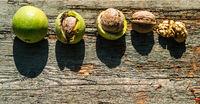 walnuts development