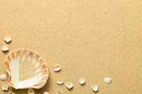 Summer, Sand Background with Shells