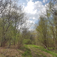 Waldweg am Fuß der Arkenberge in Berlin im Frühling