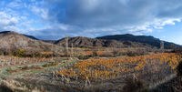 Vineyards. The Autumn Valley