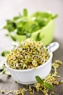 Sprouts in cups
