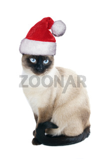 siamese cat wearing santa hat for christmas