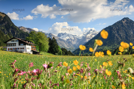 Beautiful flower meadow and snow covered mountains