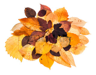 heap of various autumn fallen leaves isolated
