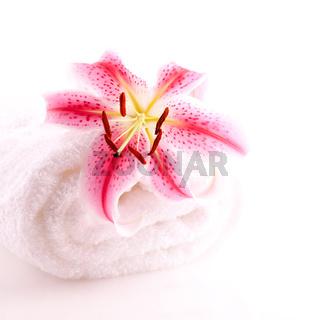 Handtuch und Lilie