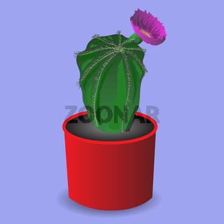 Home cactus flower