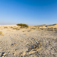 Desolate infinity in Israel