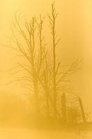 Tree trunks in misty morning light