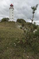 Leuchtturm Dornbusch | Hiddensee