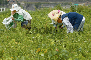 Three People Working on a Field in Arequipa Peru